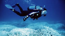 Coral Scientists Eye 'Radical Intervention' To Save The World's