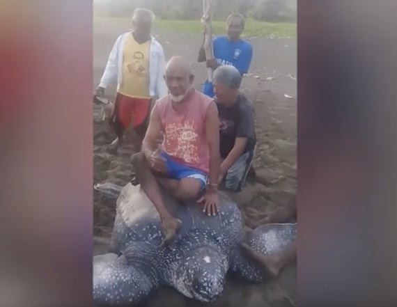 Video shows Indonesians riding distressed sea turtle