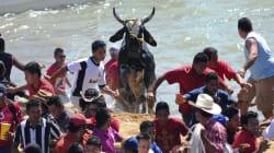 En Tlacotalpan prefirieron seguir la tradición antes que evitar actos de crueldad