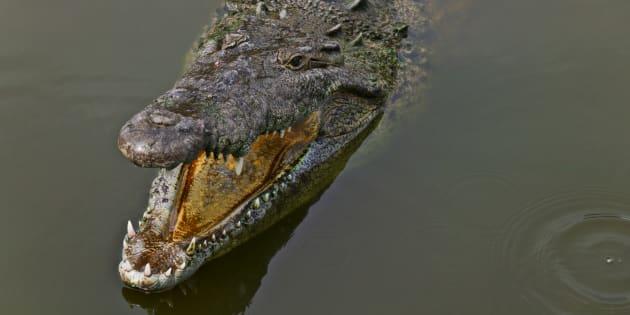 Image prétexte d'un crocodile dont nous ne connaissons pas l'opinion sur les selfies.