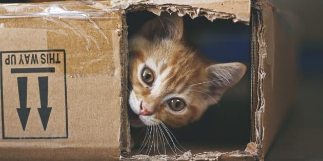 Atentado en Barcelona: ¿Por qué las redes se inundaron de gatos?