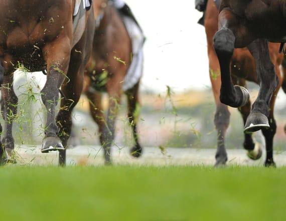Horses die in freak accident at Del Mar Racetrack