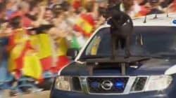 El perro 'surfero' de la Policía