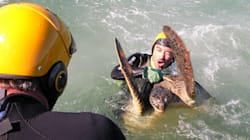 This Is How Scientists Catch A Turtle In The Ocean 'Rodeo