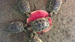 On a tous été un jour cette tortue qui ne veut pas partager sa