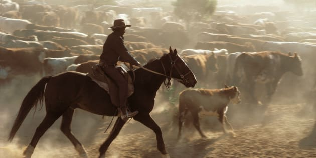 Over 300 Indigenous Australians have put forward a class action to recover years' worth of unpaid labour have stockmen and domestic workers.