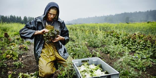 L'expertise de la paysannerie, de même que sa contribution au développement rural, apparaît de plus en plus visible dans l'espace public québécois.