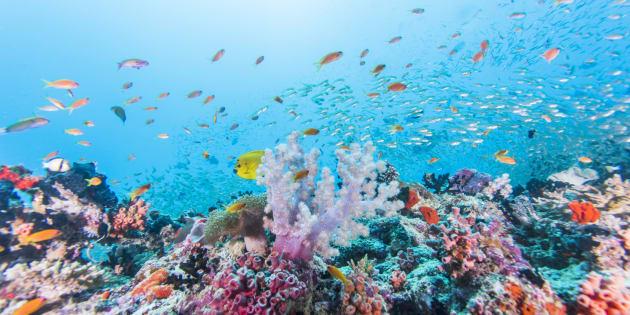 Arrecife en la República de Maldivas.