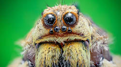 Spiders Could Eat Every Human On Earth And Still Be