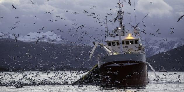 Ce que dit la science sur la pêche électrique.