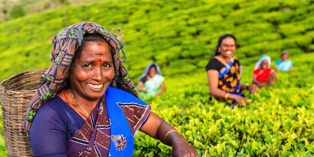 Tamil women plucking tea leaves in Southern India