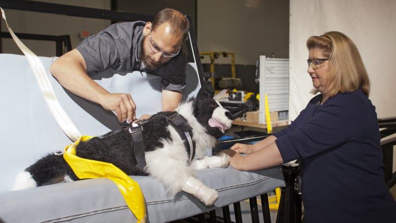 Leitfaden für die Sicherheit von Haustieren im Auto€