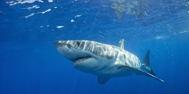 Images have been captured of a young surfer's encounter with a great white shark.