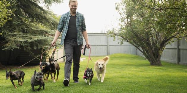 Près de 60% des personnes interrogées qui promènent leur chien en Australie et aux États-Unis ont fait savoir qu'elles se sentent plus en sécurité lorsqu'elles sortent avec leur chien.