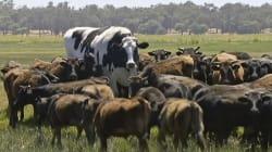 La vaca monstruosa que arrasa en redes