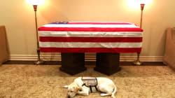 Misión cumplida, Sully: ¿qué hacía un perro en el funeral de George Bush