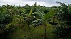 La supervivencia del planeta pasa por la producción sostenible de aceite de