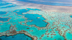 The Great Barrier Reef Is Worth $56 Billion To Our Economy. Here's The