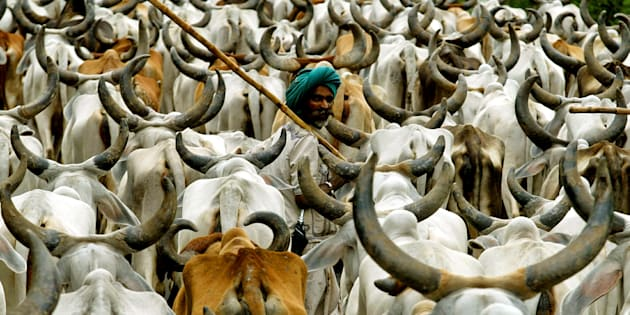 CM urges Modi to withdraw cattle trade rules