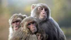 Medical College Students In Tamil Nadu Torture, Kill Baby Monkey On