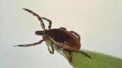 Un jour, nous disposerons d'un test de dépistage de la maladie de Lyme