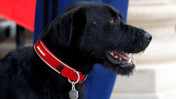French President's Dog Interrupts Meeting By Peeing On Ornate