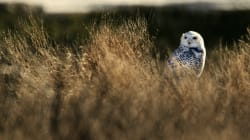 Federal Protection Isn't Saving Canada's Wildlife, New Report