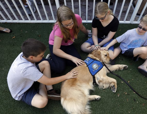 Comfort dogs offer support after Fla. shooting