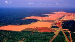 O papel do agronegócio brasileiro para atingirmos uma economia