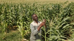 We All Want Land Reform -- Let's Make It