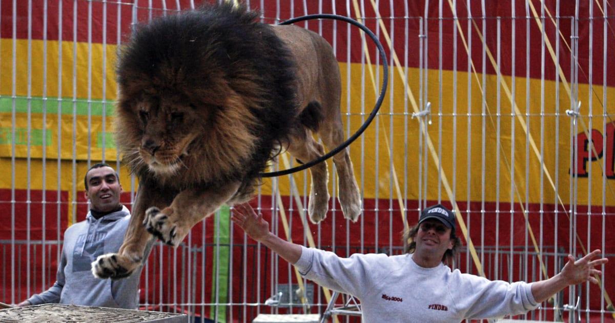 Le cirque Pinder placé en liquidation judiciaire