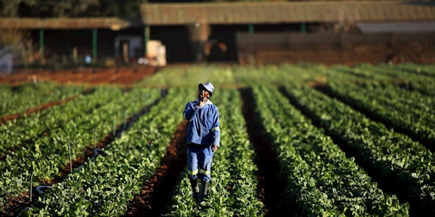 A worker on a farm south of Johannesburg. Government's land reform and restitution programmes have failed to provide adequate access to land for those that want it.