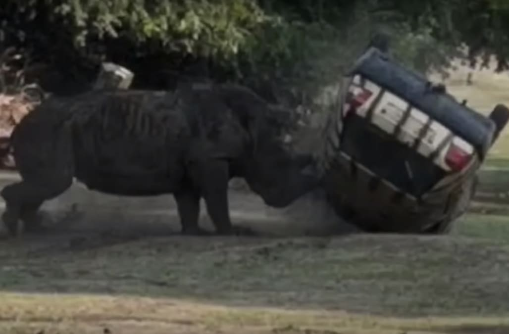 Shocking video shows rhino at German zoo flip over car with