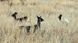 ▶'Zombie Deer Disease', Explained In Under 90
