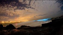 Pourquoi les vagues de la plage de San Diego sont-elles devenues fluorescentes
