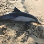 Someone Shot And Killed A Dolphin Off The Coast Of