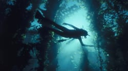 Kelp Forests Die After Taking In Fish Fleeing Global