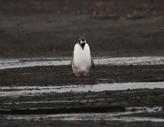 Explore Antartica's vulnerable beauty