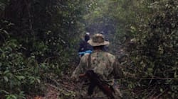 Inside The Criminal Network Ravaging Cambodia's Forests ― And The Community Fighting To Save