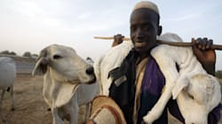 How Climate Change Is Driving Conflict Between Fulani Herdsmen And Farmers In