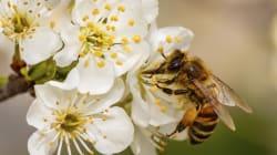 Subito un bando europeo sui pesticidi per salvare le