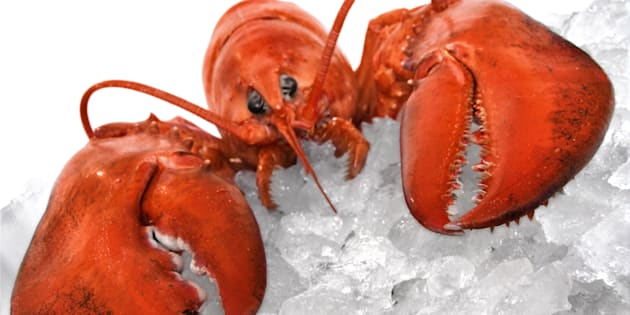 Cooked lobster on crushed ice.