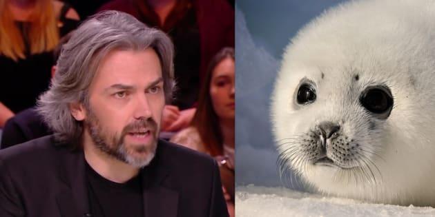 """Sur le plateau de l'émission Quotidien, mercredi 21 février, le journaliste anti-spéciste a dénoncer le """"scandale absolu"""" de la """"chasse aux bébés phoques""""."""
