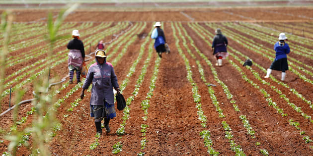 Farm workers stand in a field at a farm in Klippoortie, east of Johannesburg.