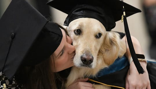 Griffin The Golden Retriever Receives Honorary Diploma At Owner's