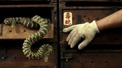 Inside The Thriving Snake Black Market In