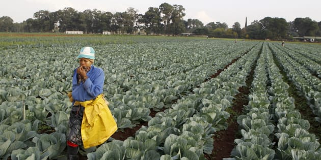 A worker walks between rows of vegetables at a farm in Eikenhof, south of Johannesburg, April 24, 2012.
