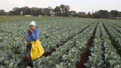 Agricultural Policy Needs To Acknowledge The Leadership Role Women