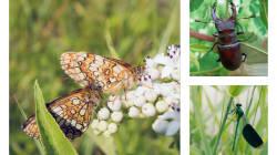 Pour sauver les insectes, l'Allemagne prépare une loi à 100 millions