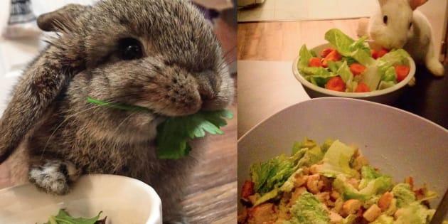 Eles realmente amam salada.